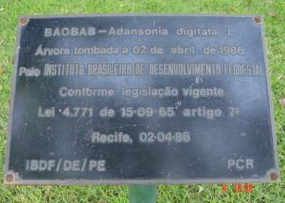 Placa bij de Baobab
